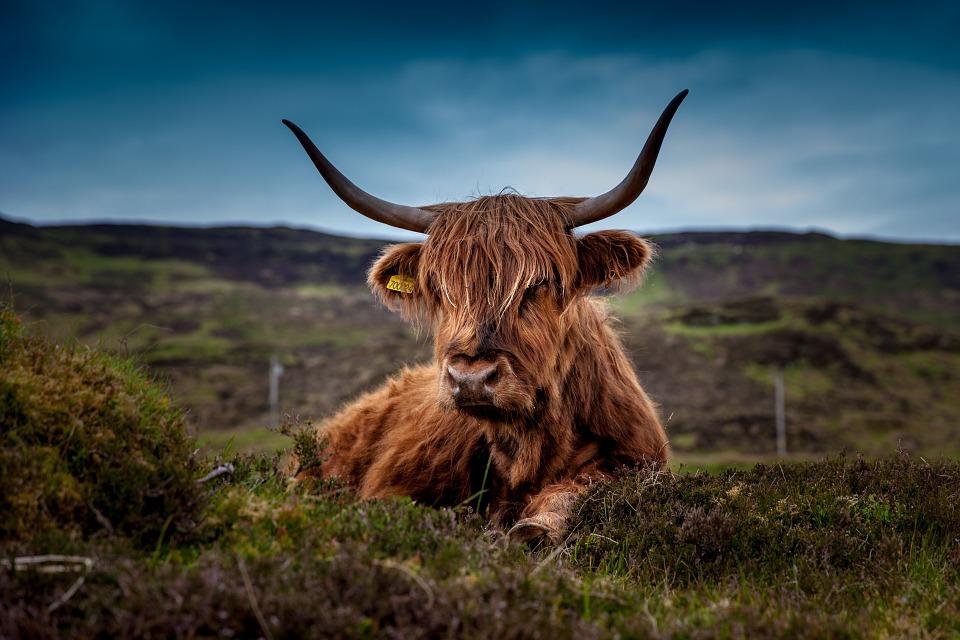 Écosse : chaleur humaine et bon vivre